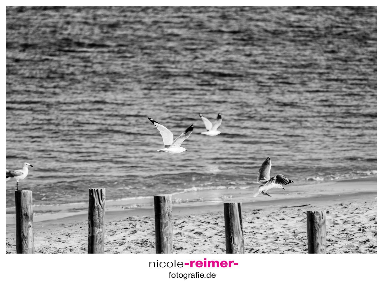 Möwenflug_Nicole-Reimer-Fotografie