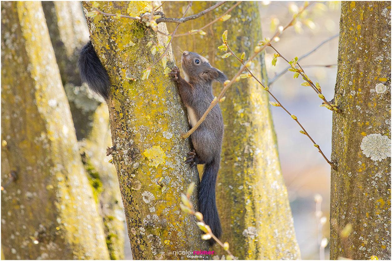 Baby Eichhörnchen begeben sich auf Entdeckungsreise - Nicole Reimer Fotografie