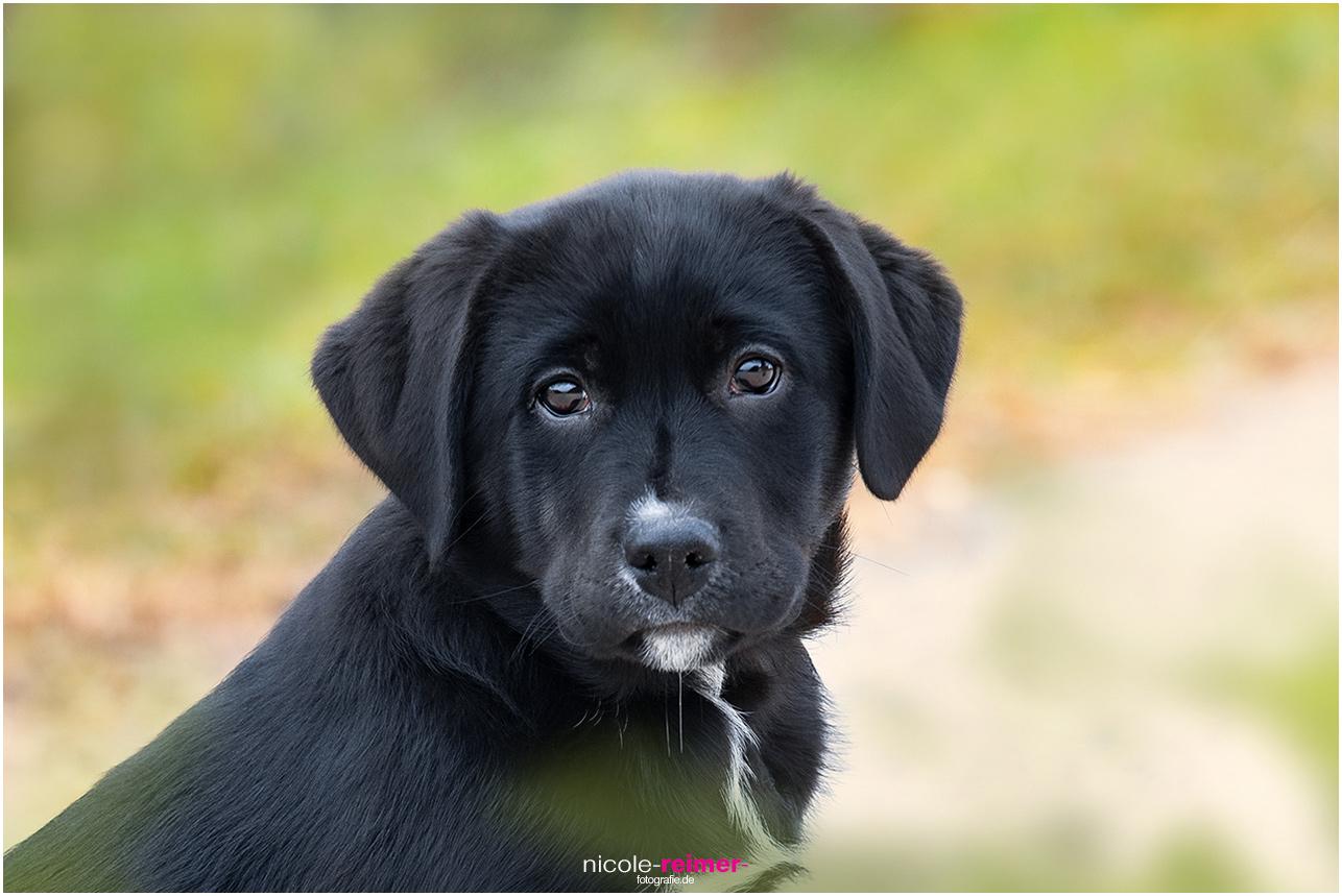 Hunde-Fotoshooting Mara, Hundefotografie, Junger Hund, Hundefotos, Nicole Reimer Tierfotografie