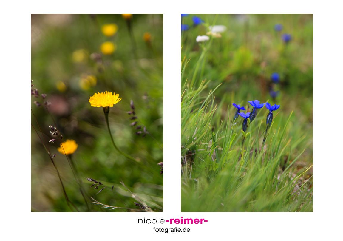 Alpenpflanzen2