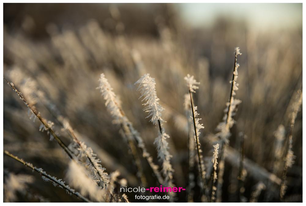 Gefrorenes-Gras