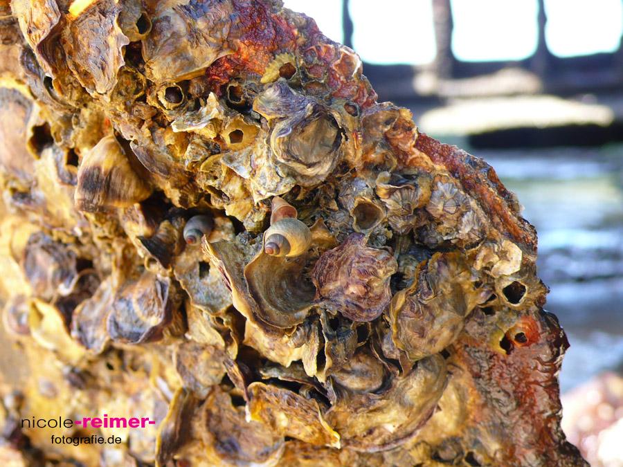 Muscheln auf Maheno