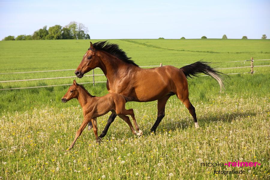 Pferd-mit-Fohlen1