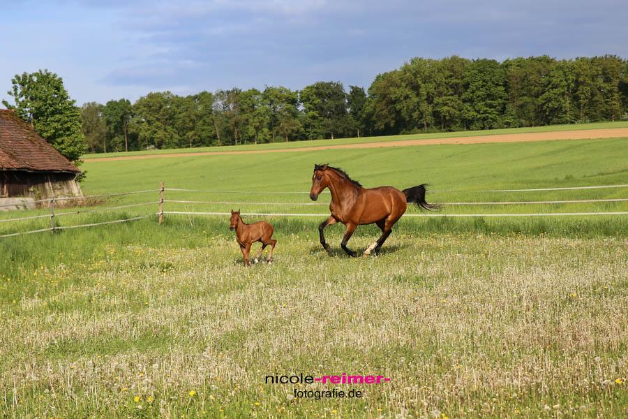 Pferd-mit-Fohlen2