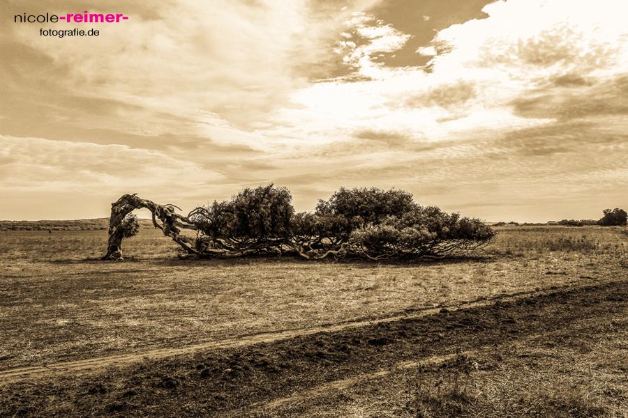 costal-tree