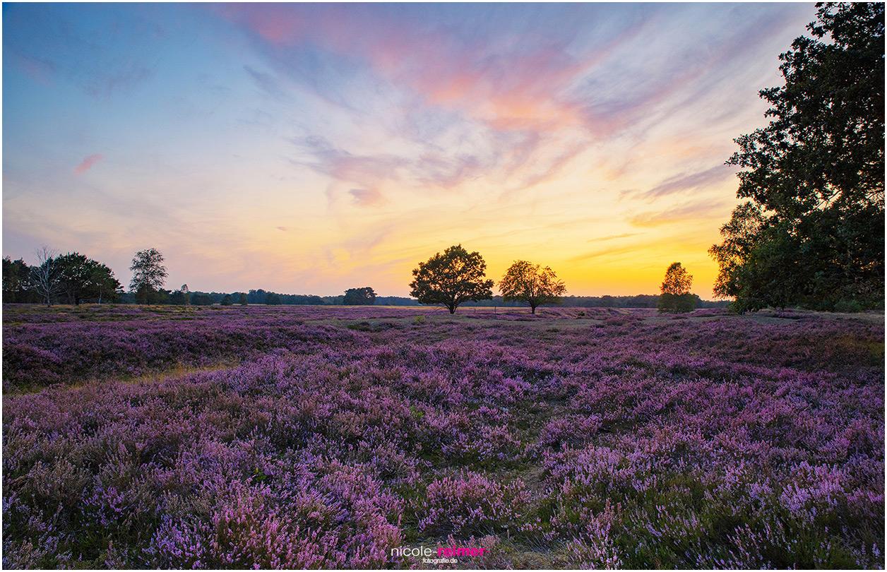 Sonnenuntergang in der Osterheide, Lüneburger Heide bei Schneverdingen, Nicole Reimer Fotografie