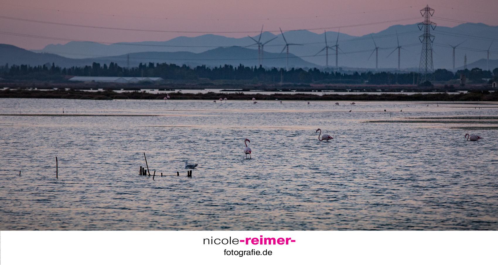 Flamingos-Industrie
