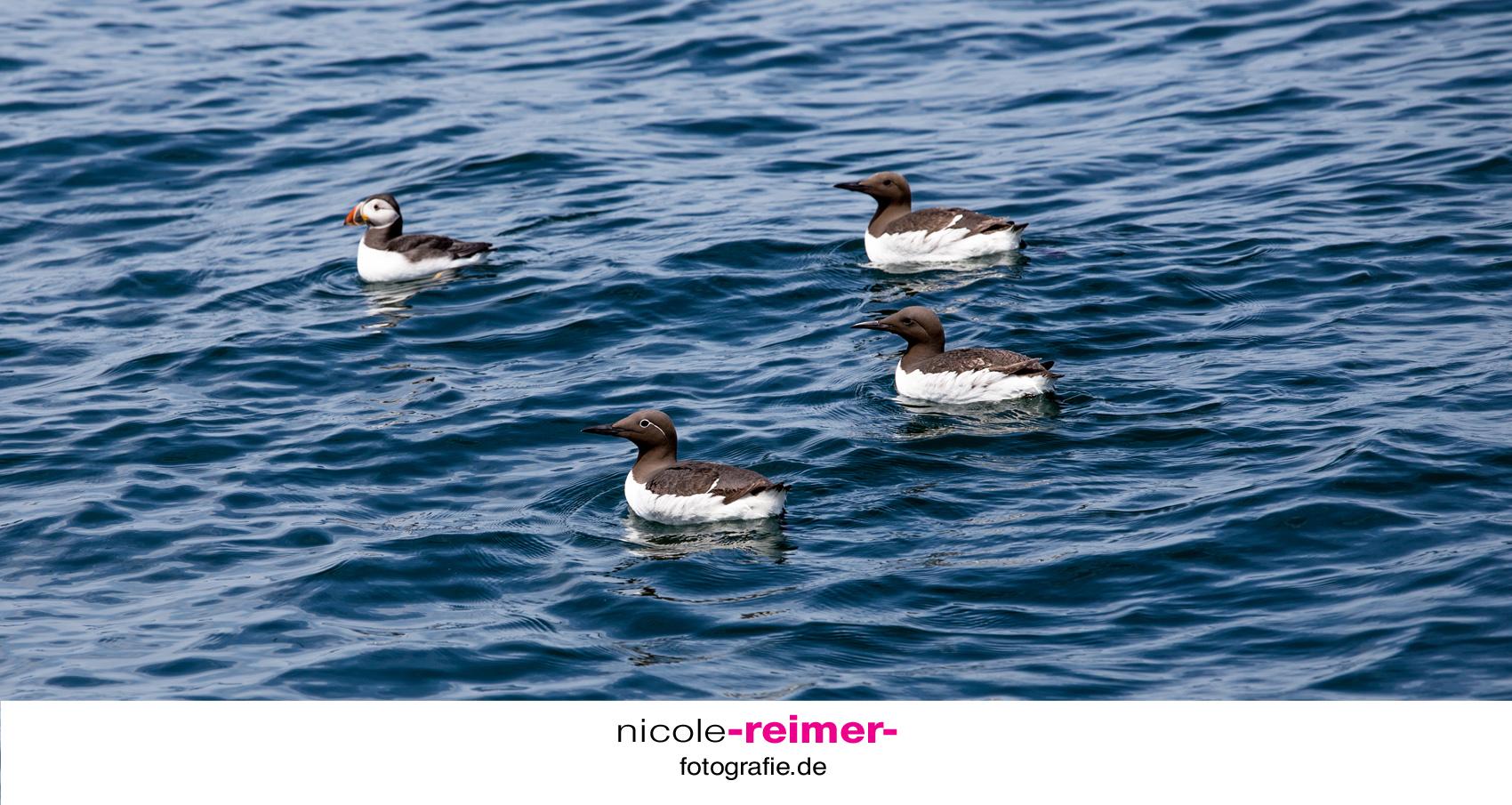 Seabirds-Wales1