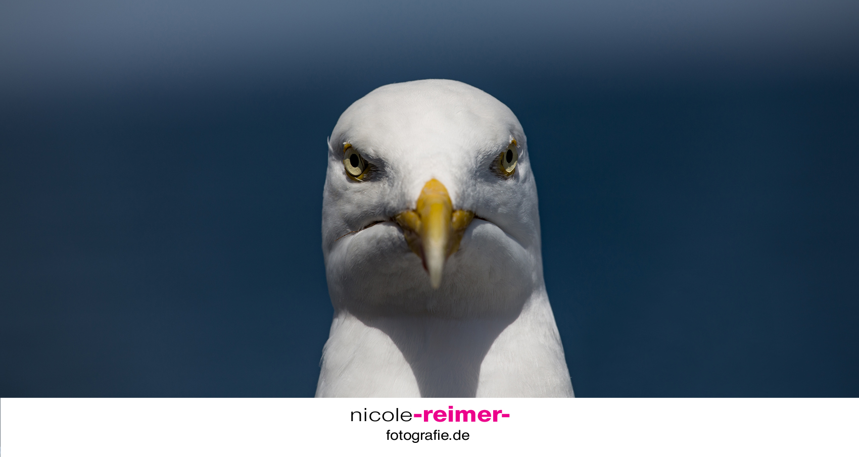 angry-seagull