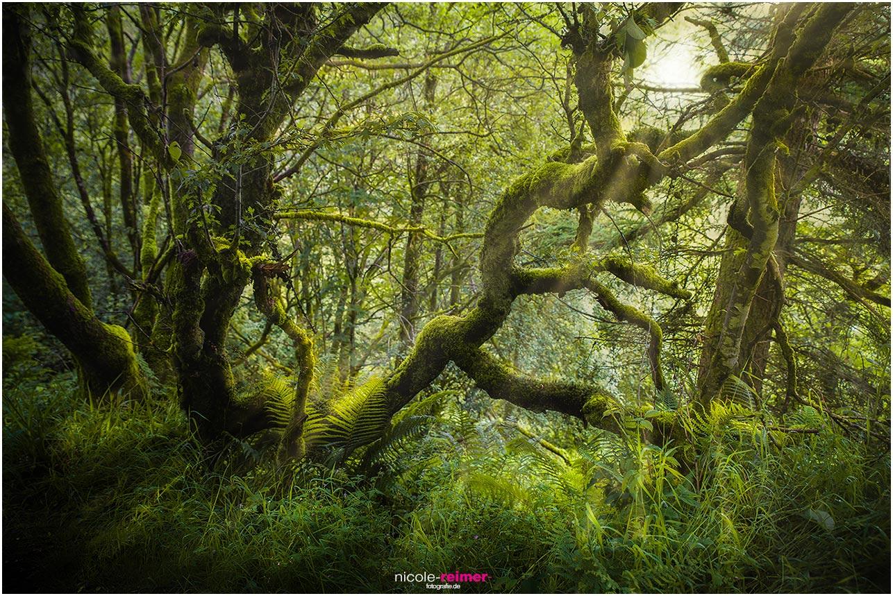 Mystische Stelle im Glenariff Forest Park, Nordirland - Nicole Reimer Landschaftsfotografie