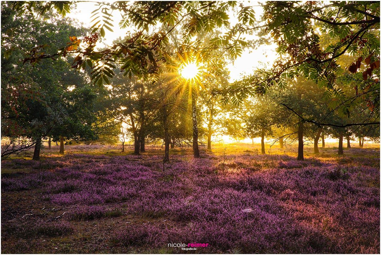 Sonnenaufgang in der Osterheide bei Schneverdingen. Lüneburger Heide im Morgenlicht. Nicole Reimer Fotografie