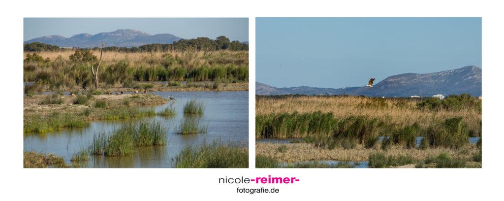 Naturpark S'Albufera - Nicole Reimer Fotografie