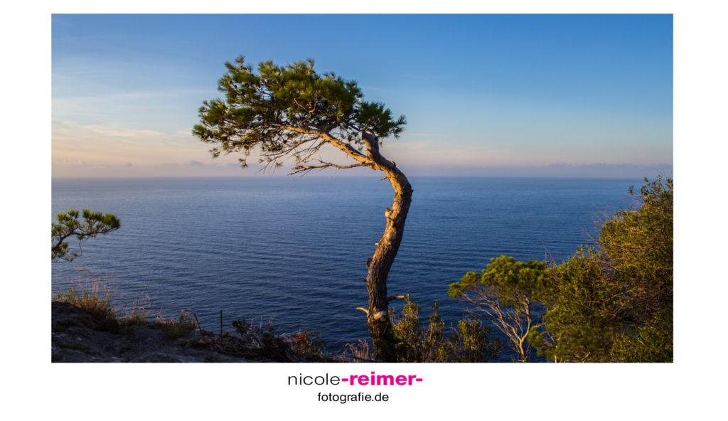 Einsamer Baum am Torre del Verger - Nicole Reimer Fotografie