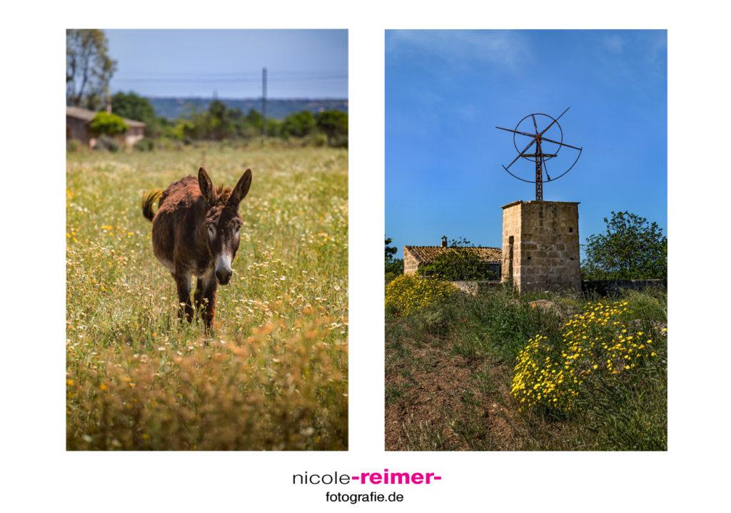 Esel und alte Windmühle im Süden Mallorcas- Nicole Reimer Fotografie