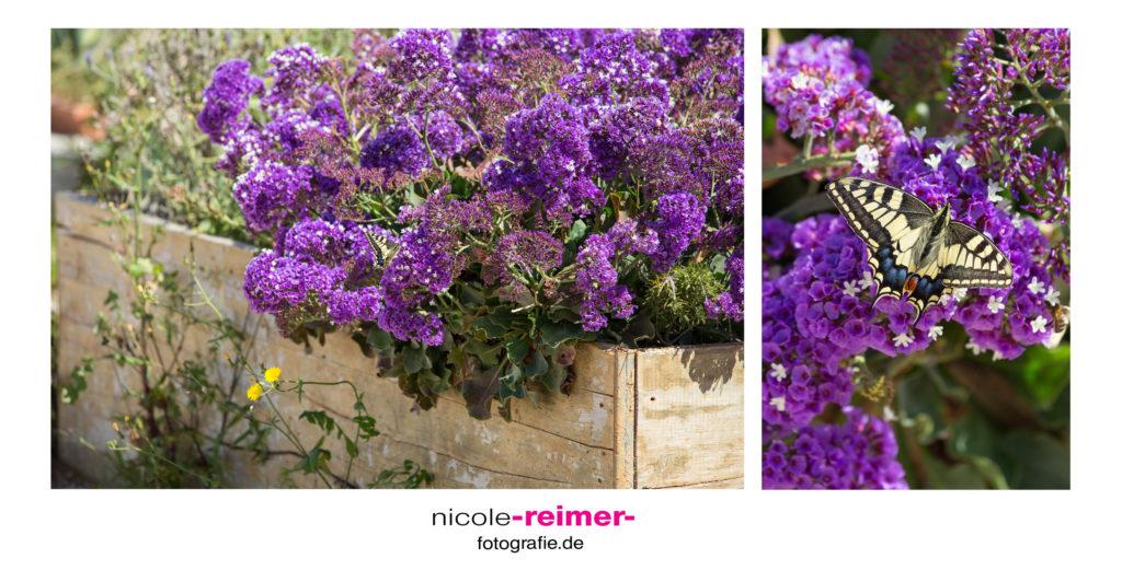 Blumen und Schmetterling im Süden Mallorcas - Nicole Reimer Fotografie