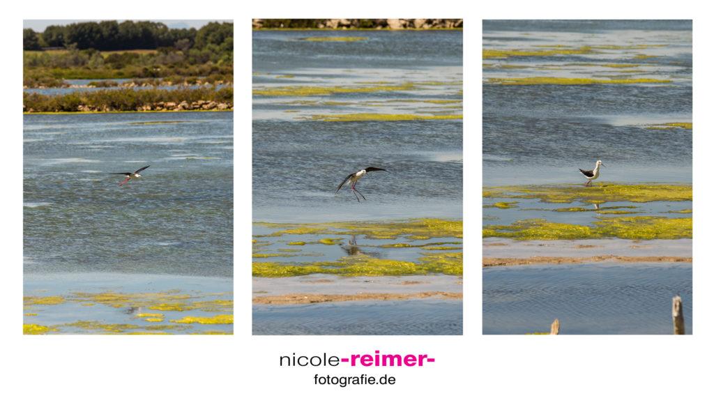 Vögel bei den Salzsalinen - Nicole Reimer Fotografie