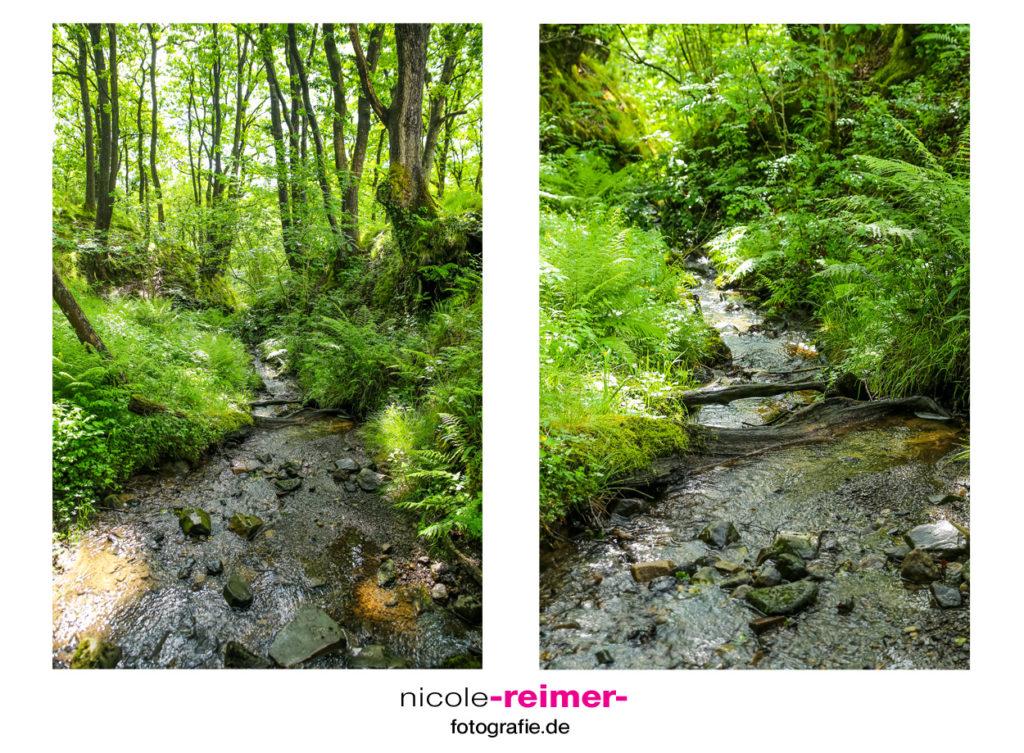 Wald im Brecon Beacons Nationalpark, Wales