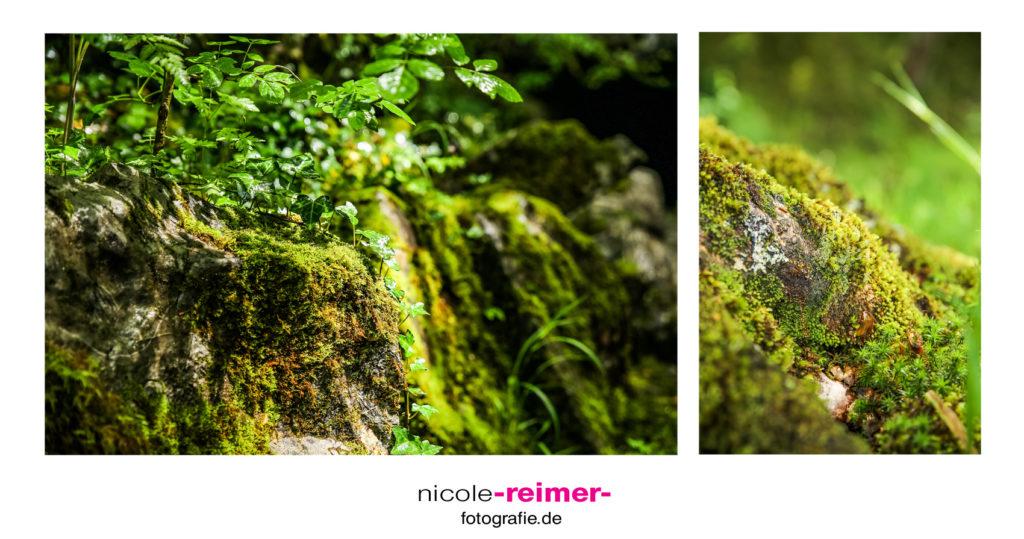 Detailaufnahme Wald, Brecon Beacons Nationalpark, Wales, Großbritannien