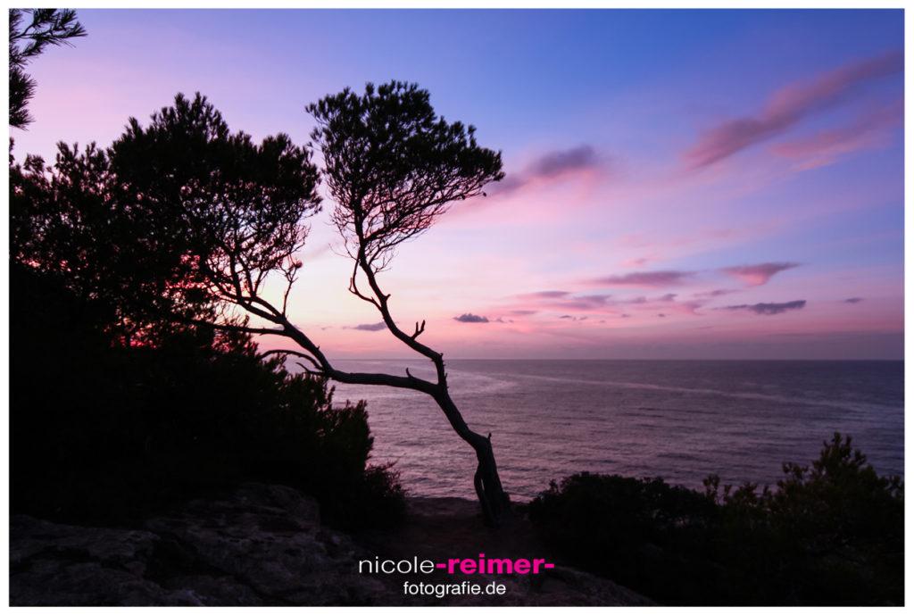 Nicole Reimer Fotografie_Baum im Sonnenaufgang