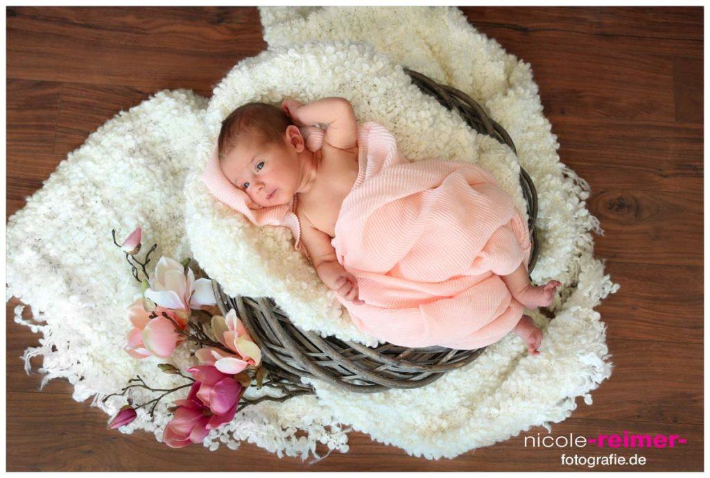 Babyfotografie Nicole Reimer Fotografie